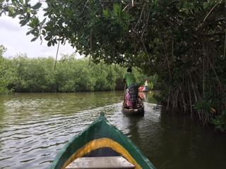 Ecotours Boquilla canoe trip thru mangroves